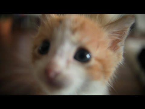 Kitten Cuteness Overload