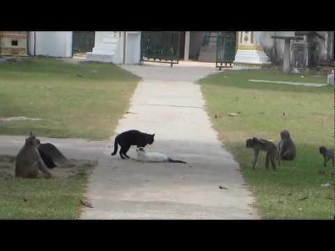 Jokes - Break It Up Cats