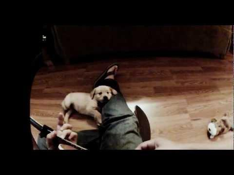 Cute - Puppy Listens To Guy Playing Guitar