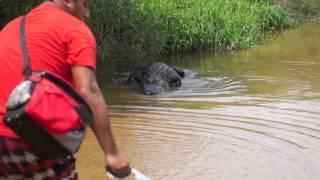 Dumb Guys Vs Alligator