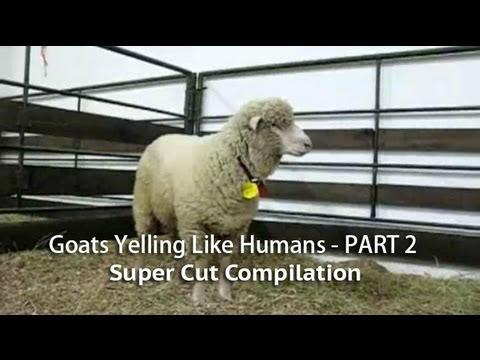 Jokes - Goats Yelling Compilation