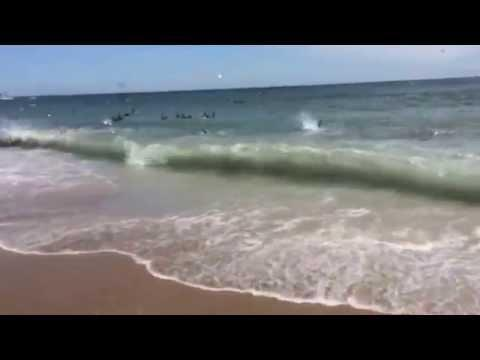 Sharks Having Their Lunch At North Carolina Beach