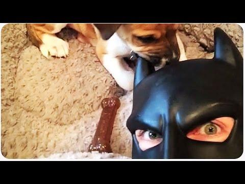 Batman Dad Is Back With More Funny Videos