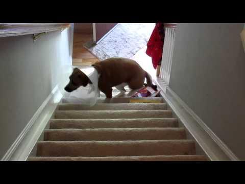 WIN - Smartest Dog