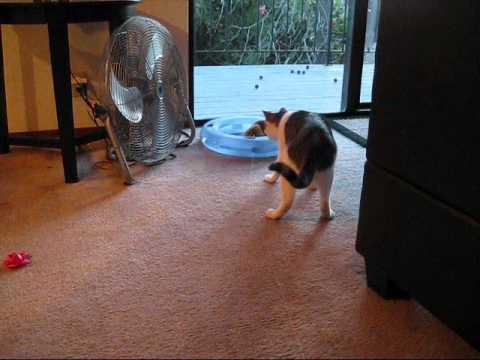 Jokes - Cat Vs Stuffed Lion Toy