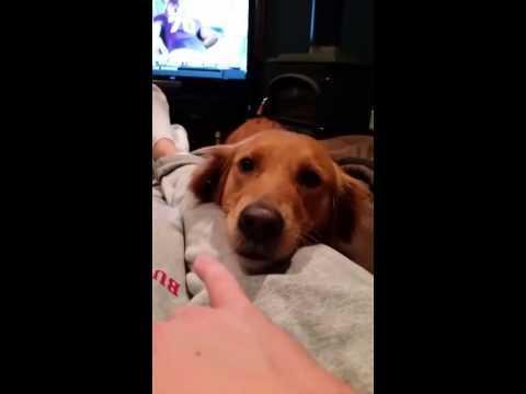 Dog Makes Funny Sound