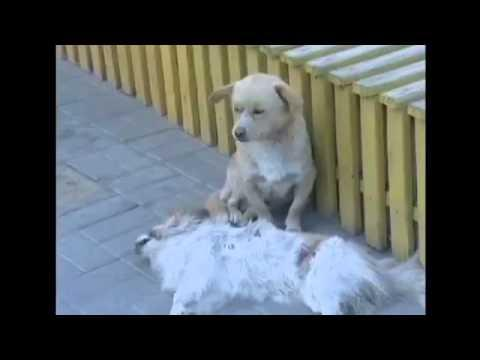 Sweetest Dog Doesn't Want To Leave Dead Friend Alone