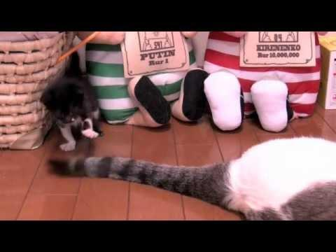 Cute - Kitten Plays With Cat's Tail