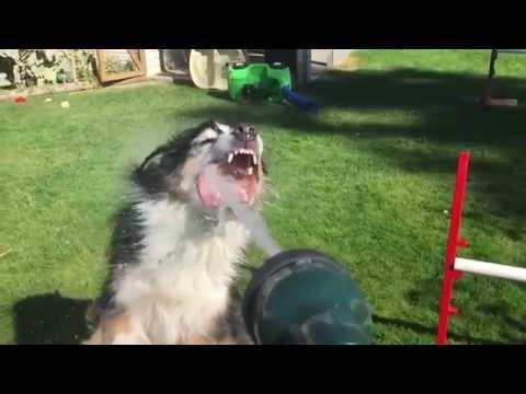 Dogs Attacking The Garden Hose In Slow Motion