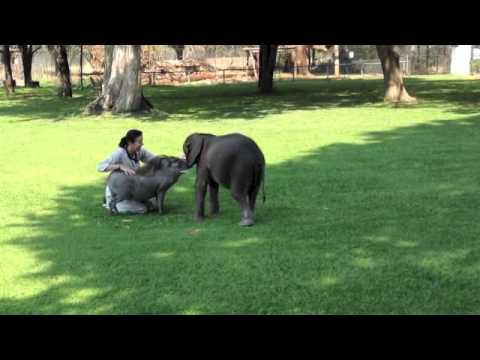 Woman Hugs Moyo The Baby Elephant