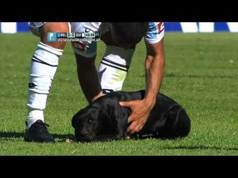 Dog Interrupts The Soccer Game