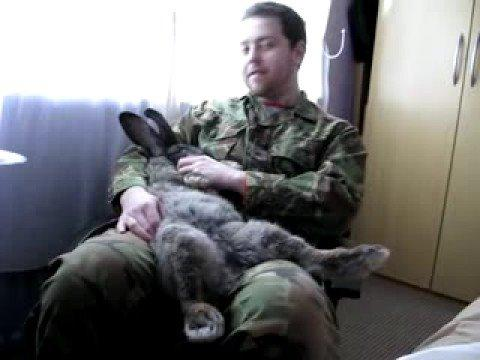 Cute - That's One Big Bunny