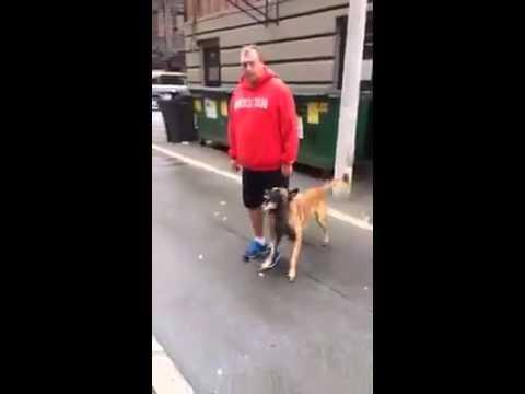German Shepherd Is Well Trained