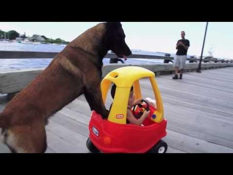 Dog Takes The Kid For A Walk At The Park