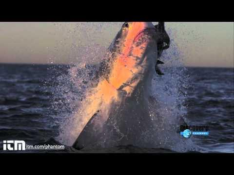 Awesome - Shark Attacks In Slow Motion