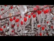 Mr Freeze Visits Toronto For Christmas