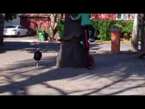 Kid On Unicycle Vs The Turkey