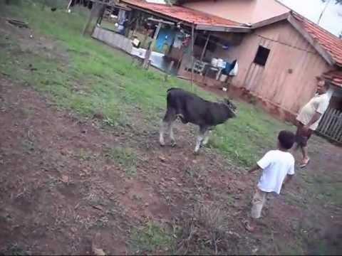 Jokes - Mule Attacks The Kid