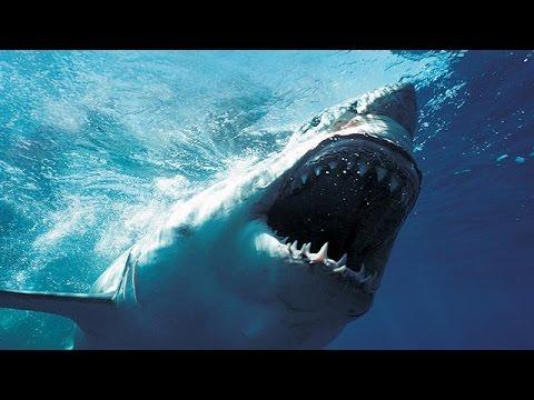 Shark Vs The Sharkcam