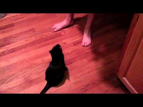 Jokes - Girl Proposes To Cat