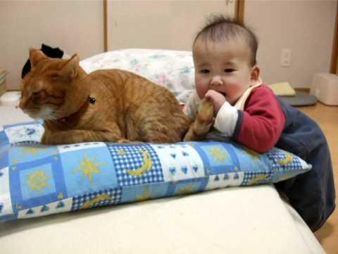 Cute - Baby Chews On Cat's Tail