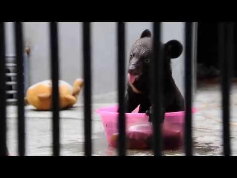 Playful Bear Cub
