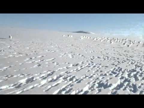 Polar Rabbits Vs Snowmobile
