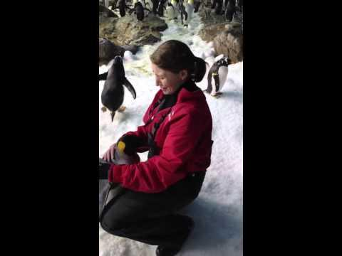 Cute - Woman Hugs A King Penguin