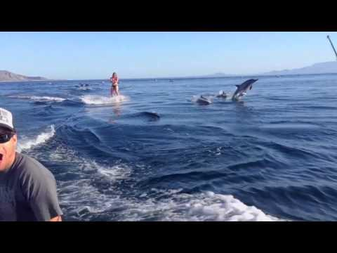Awesome - Wakeboarding With The Dolphins