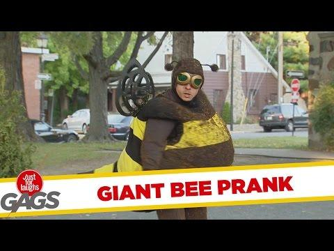 Giant Bee On The Tree Prank