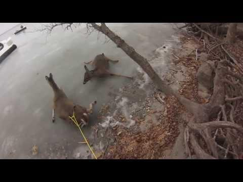 Hovercraft Used To Rescue Deer From Frozen Albert Lea Lake