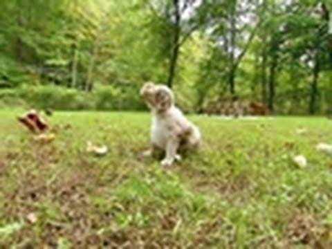 Cute - Puppies Go Outside For First Time