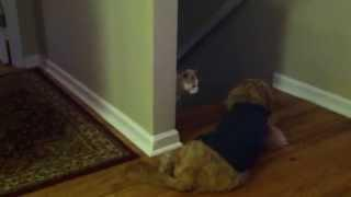 How A Cat Gets Past The Dog