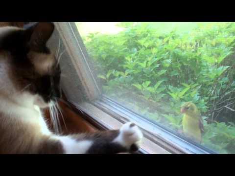 Jokes - Bird Taunts The Cat