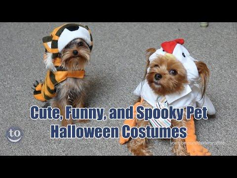 Funny, Cute, And Adorable Pets Dressed Up For Halloween