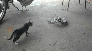 Scaredy Cat Vs Snake