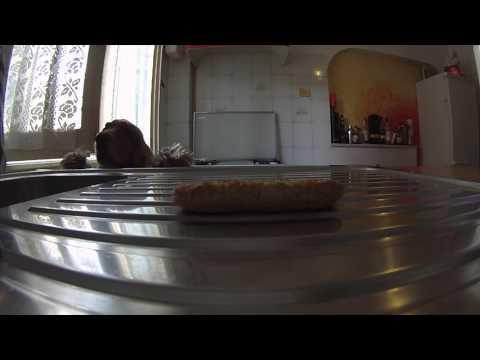 Dog Wants The Cookie So Badly