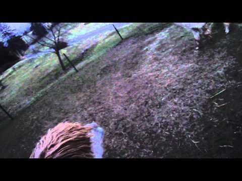 Jokes - Guy Breaks Up Fight Between Two Alpacas
