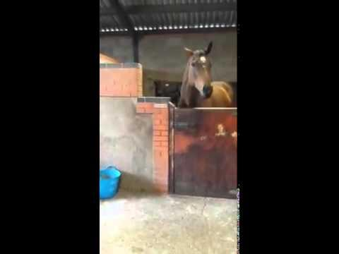 Horse That Likes To Dance