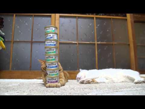Jokes - Balancing Cat Food Cans On Cat's Leg