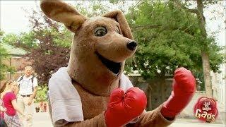 Boxing With The Kangaroo Prank