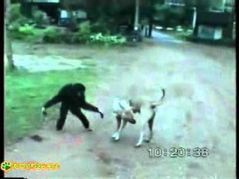 Animals - Dog vs monkey