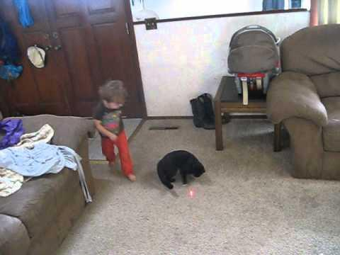 Toddler Tries To Catch The Laser With The Cat