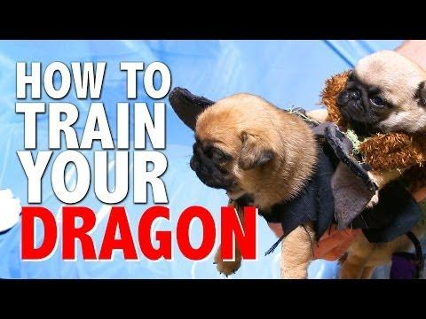 How To Train Your Dragon Movie Puppies Parody