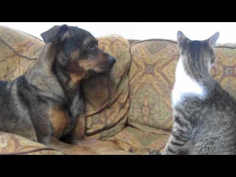 Cute - Dog Play Fights With The Cat
