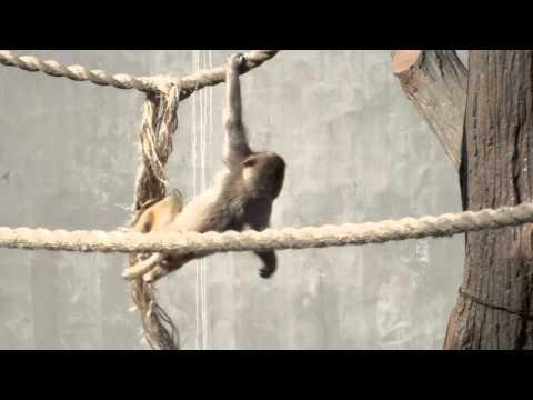 Cute - Playful Baby Monkeys