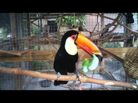 Toucan Bird Plays With A Squeaky Toy