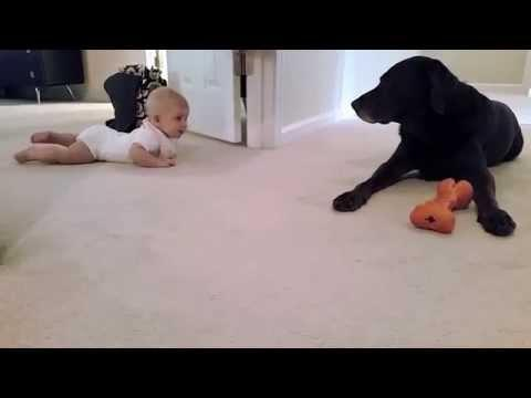 Baby Tries Crawl Closer To The Dog