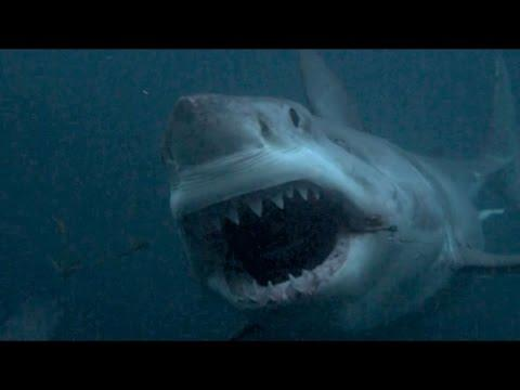 Discovery Channel Needs To Cancel Shark Week Programs