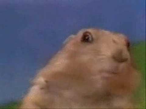 Chipmunk - Drama Prairie Dog